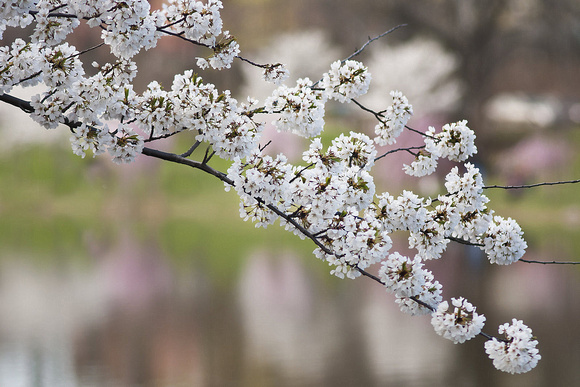 White Blossoms & Spring Colors